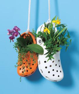 crocplanters.jpg